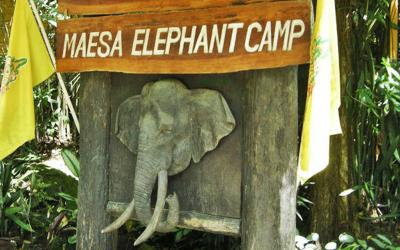 (大象营) elephant camp